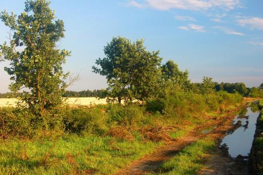 imagen 1 de Parcela rústica ecologica