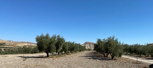 imagen 4 de Gran Oportunidad finca Olivos Granada