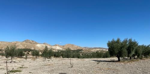 imagen 8 de Gran Oportunidad finca Olivos Granada