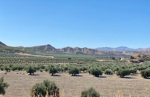 imagen 2 de Gran Oportunidad finca Olivos Granada
