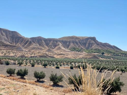 imagen 3 de Gran Oportunidad finca Olivos Granada
