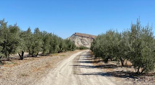 imagen 6 de Gran Oportunidad finca Olivos Granada
