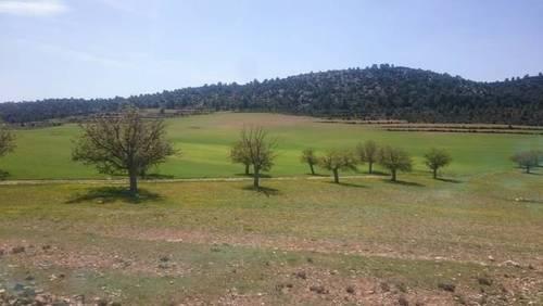 imagen 3 de Venta o alquiler finca en Letur (Albacete)