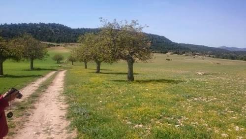 imagen 7 de Venta o alquiler finca en Letur (Albacete)