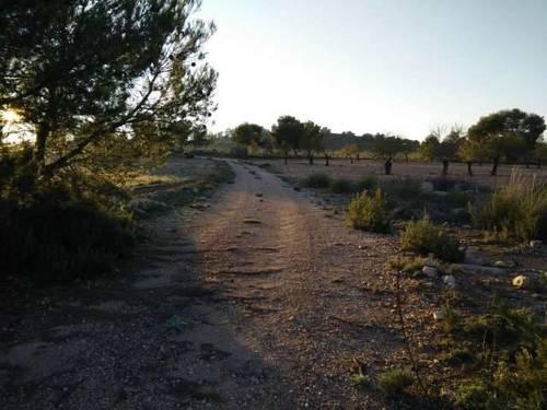 imagen 3 de Finca de caza y recreo en Pozohondo