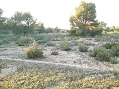 imagen 5 de Finca de caza y recreo en Pozohondo