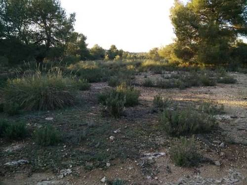 imagen 6 de Finca de caza y recreo en Pozohondo