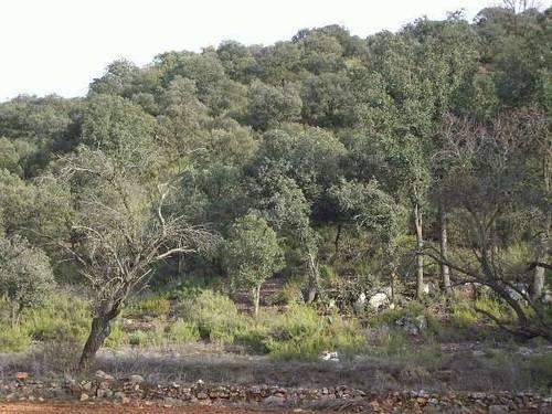 imagen 7 de Finca de caza en Ossa De Montiel (ALBACETE)