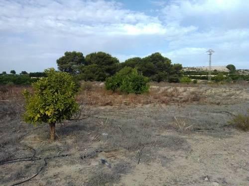imagen 3 de Venta de terreno en Los Montesinos
