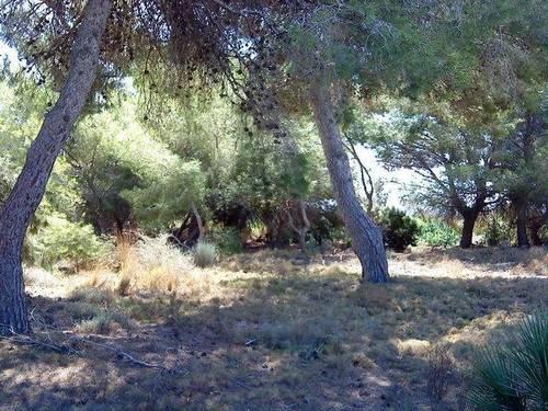 imagen 4 de Venta de terreno en Los Montesinos