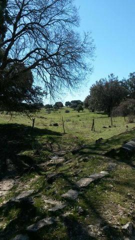 imagen 3 de Terreno Guadalix de la Sierra Madrid