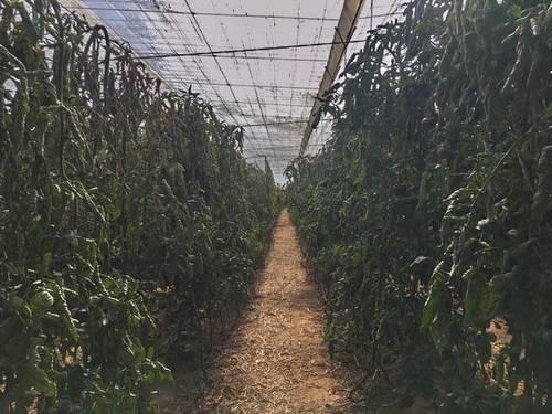 imagen 2 de Venta invernadero Abrucena