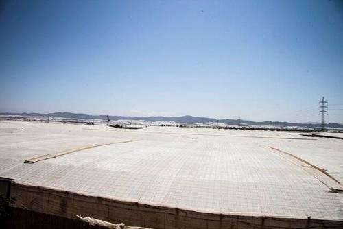 imagen 5 de Venta invernadero en San Isidro de Níjar