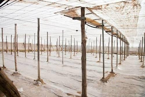 imagen 2 de Venta invernadero en San Isidro de Níjar