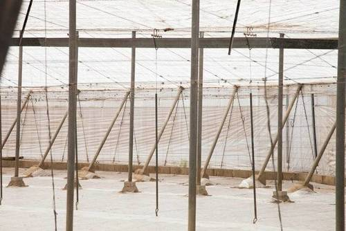 imagen 3 de Venta invernadero en San Isidro de Níjar