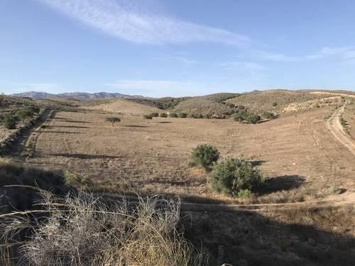imagen 3 de Terreno para invernadero Sorbas/Lubrin KM4, Almeria