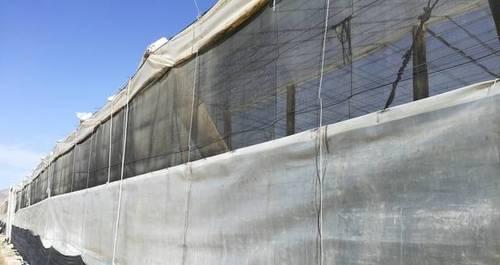 imagen 2 de Invernadero Balerma El Ejido Almeria