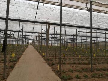 imagen 1 de Invernadero Paraje el Cautivo Nijar Almeria