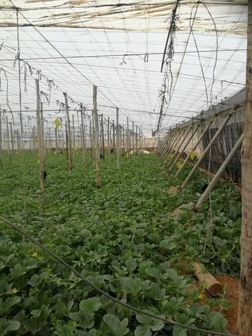 imagen 2 de Invernadero El Barranquete Almeria