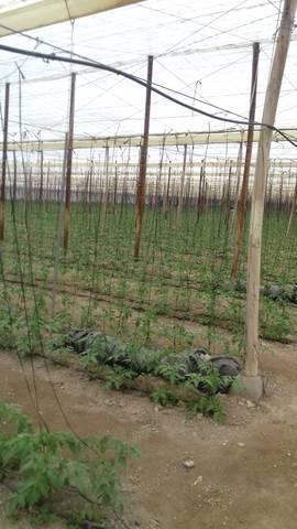 imagen 2 de Invernadero Sorbas Almeria