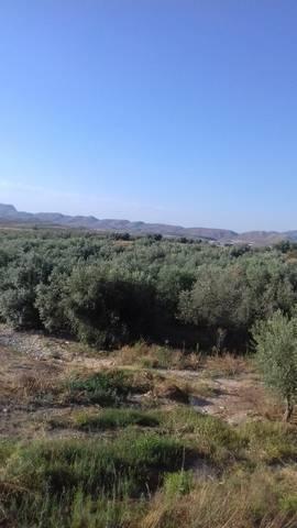 imagen 5 de Invernadero Sorbas Almeria