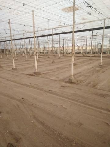 imagen 1 de Invernadero Almeria