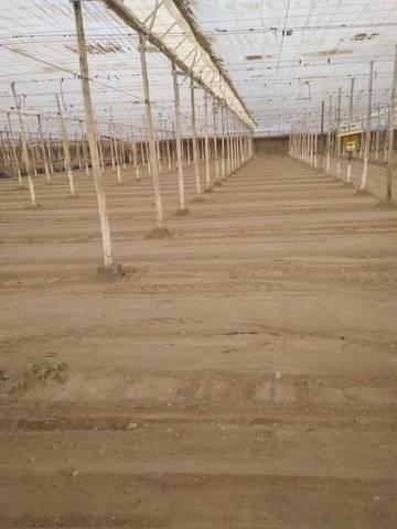 imagen 2 de Invernadero Almeria
