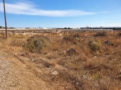 imagen 3 de Terreno para invernadero en El Ejido