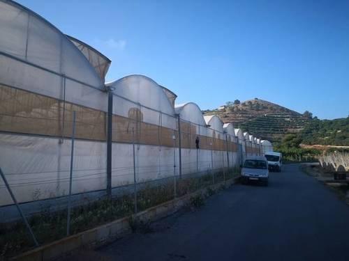 imagen 1 de Invernadero multitunel en Motril