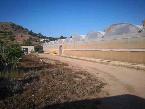 imagen 4 de Invernadero multitunel en Motril
