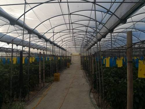 imagen 8 de Invernadero multitunel en Motril