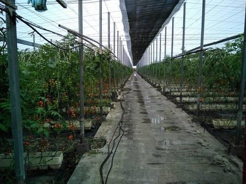 imagen 1 de Venta de invernadero en Motril