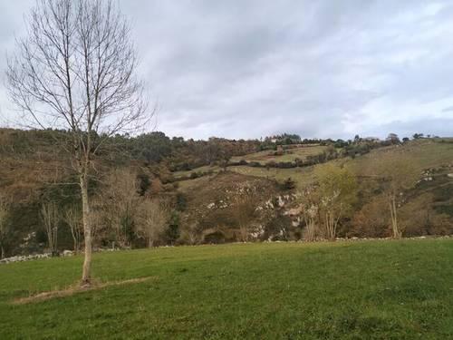 imagen 1 de Terreno para ganado en Oviedo