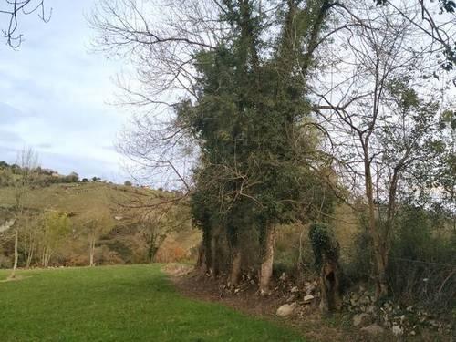 imagen 4 de Terreno para ganado en Oviedo