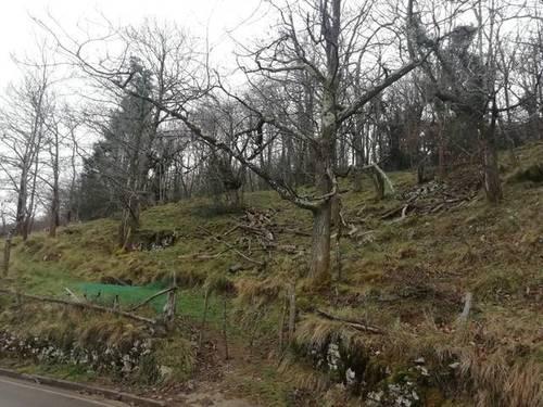 imagen 7 de Terreno para ganado y quesería en Bobia De Abajo