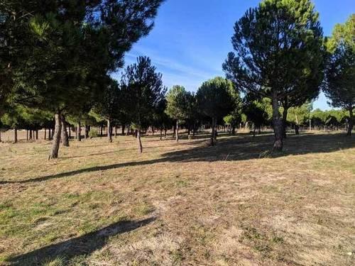 imagen 3 de Venta parcela rústica en El Bohodon