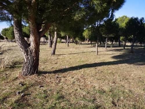 imagen 4 de Venta parcela rústica en El Bohodon
