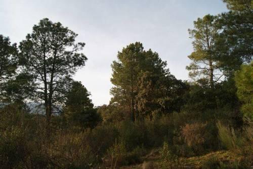 imagen 1 de Venta de terreno para alojamientos rurales en Ávila ⛺