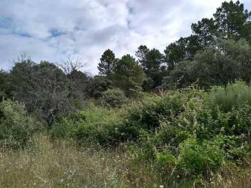 imagen 4 de Venta de terreno para alojamientos rurales en Ávila ⛺