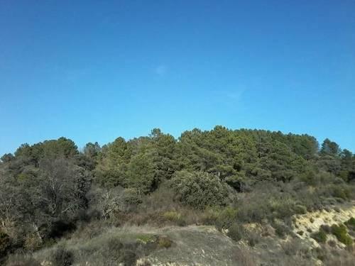 imagen 7 de Venta de terreno para alojamientos rurales en Ávila ⛺