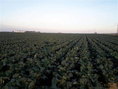 imagen 1 de Venta de terreno en Mengabril (BADAJOZ)
