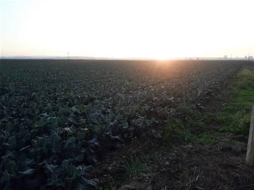 imagen 2 de Venta de terreno en Mengabril (BADAJOZ)