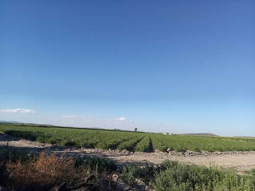 imagen 2 de Venta de terreno en Santa Amalia