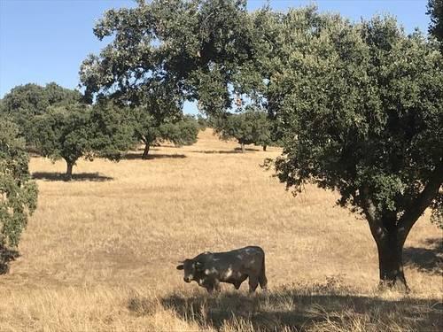 imagen 1 de Venta de Finca en Helechosa De Los Montes