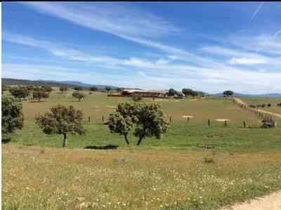 imagen 2 de Venta de Finca en Helechosa De Los Montes