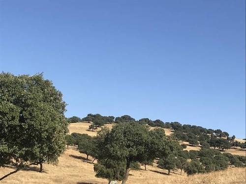imagen 3 de Venta de Finca en Helechosa De Los Montes