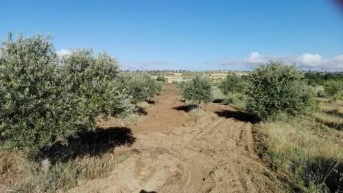 imagen 2 de Venta de Finca en Malpartida De La Serena