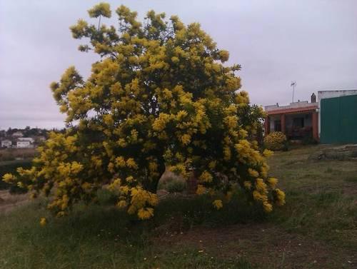 imagen 2 de Venta de Casa Rural en Almendralejo (Badajoz)