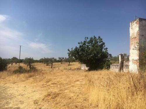 imagen 2 de Venta de Finca Rústica en Zafra (Badajoz)