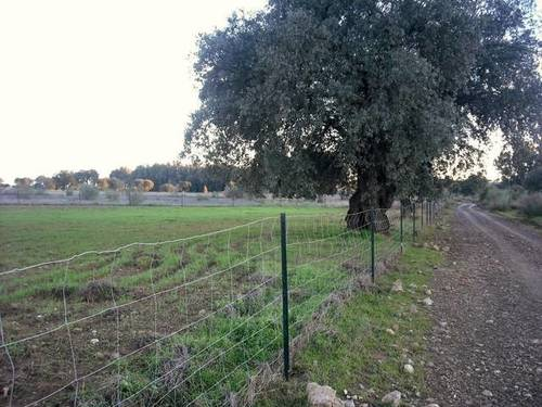 imagen 1 de Venta de finca agrícola en Campillo De Llerena. (Badajoz)